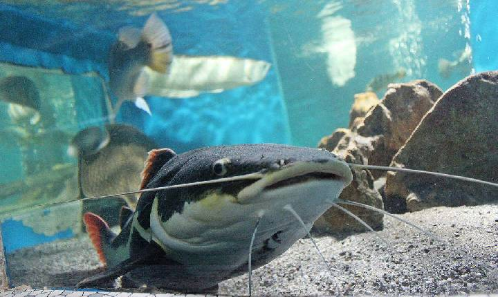 Crianças podem visitar Planeta Inseto e Museu da Pesca pela internet